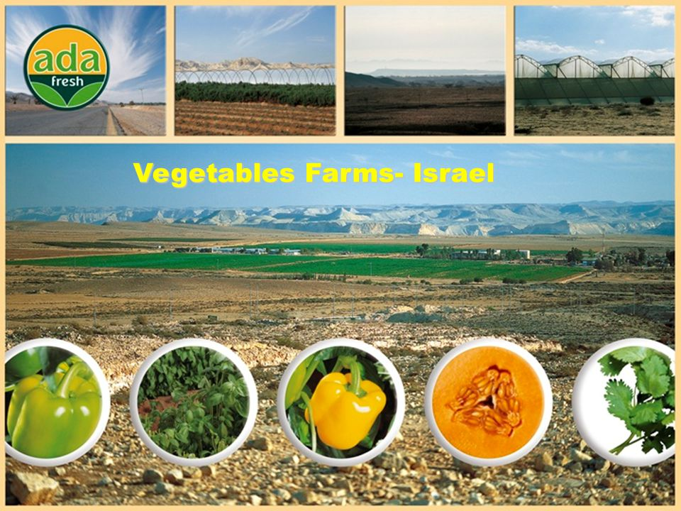 Vegetables Farms- Israel