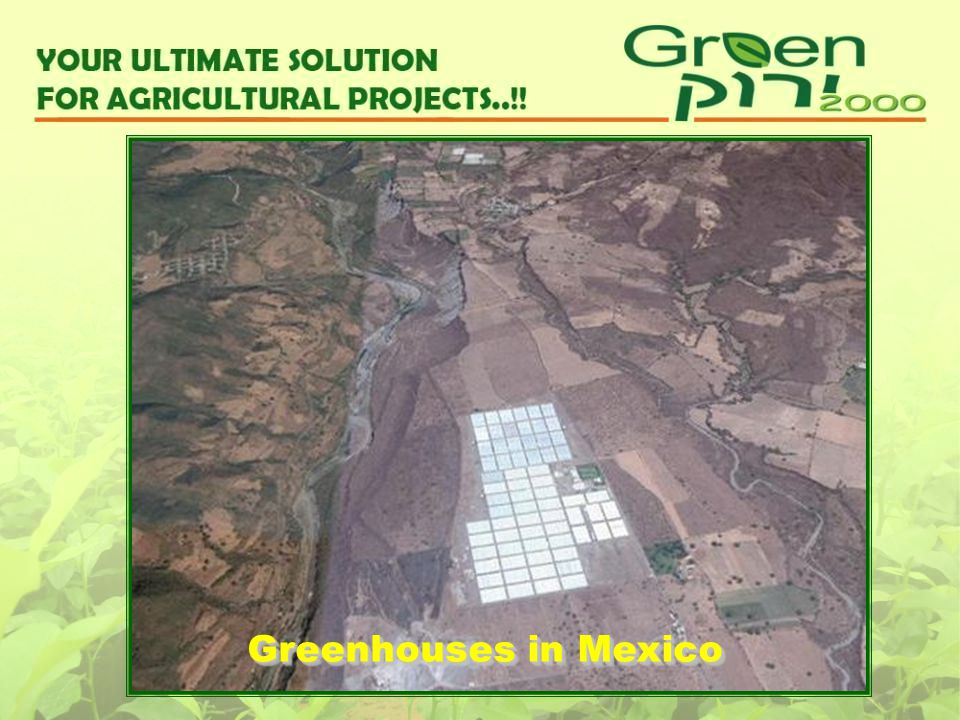 Greenhouses in Mexico