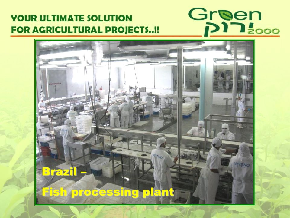 Brazil – Fish processing plant