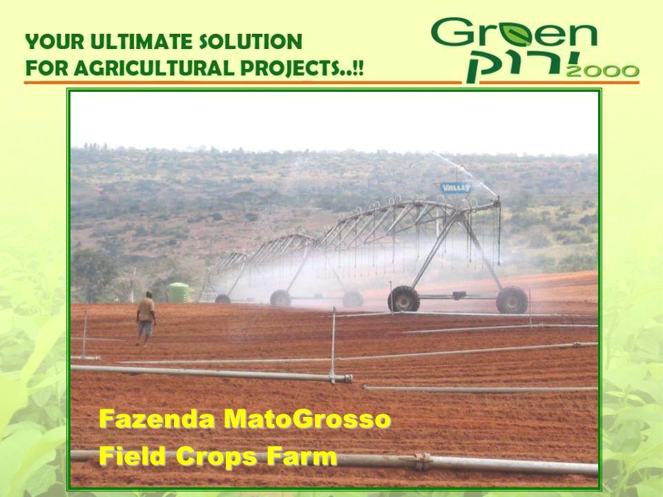 Fazenda MatoGrosso Field Crops Farm