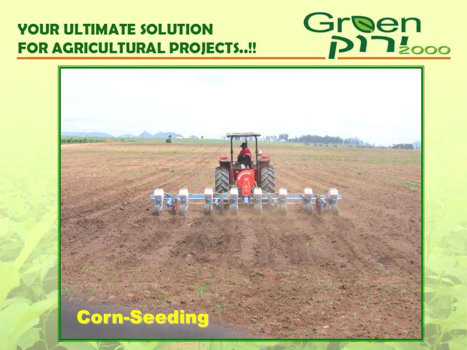 Corn-Seeding