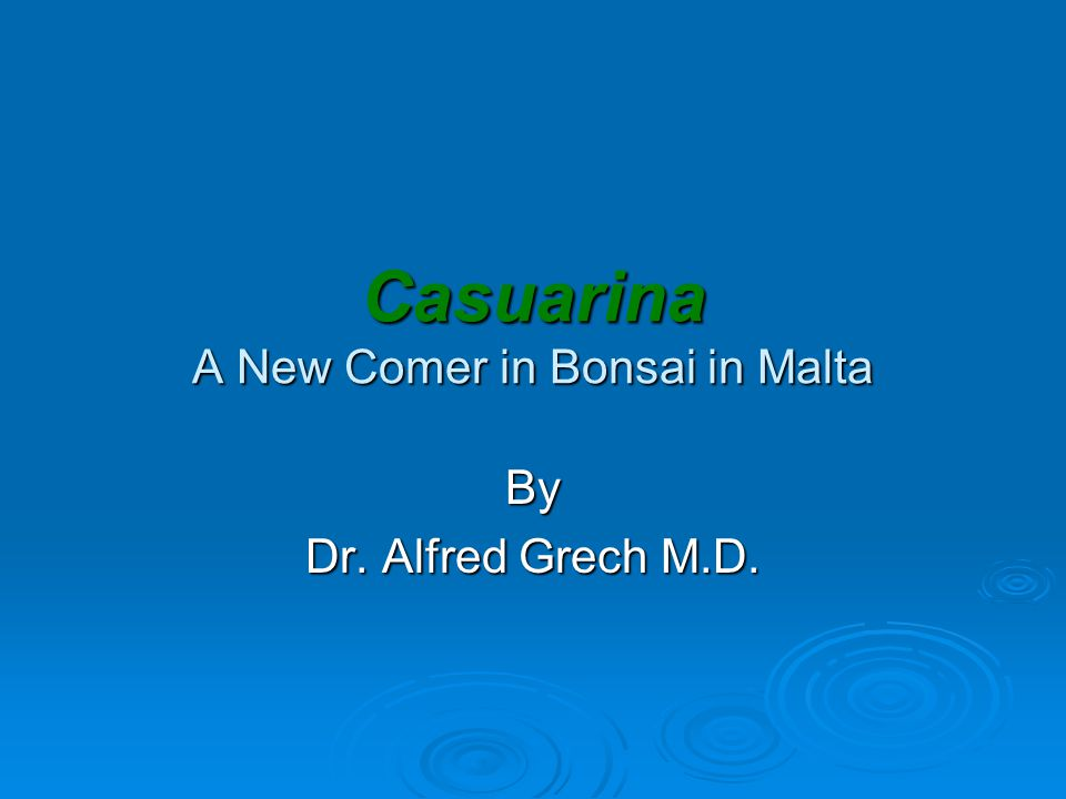 Casuarina A New Comer in Bonsai in Malta By Dr. Alfred Grech M.D.