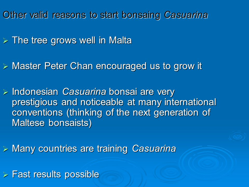 Other valid reasons to start bonsaing Casuarina The tree grows well in Malta The tree grows well in Malta Master Peter Chan encouraged us to grow it M