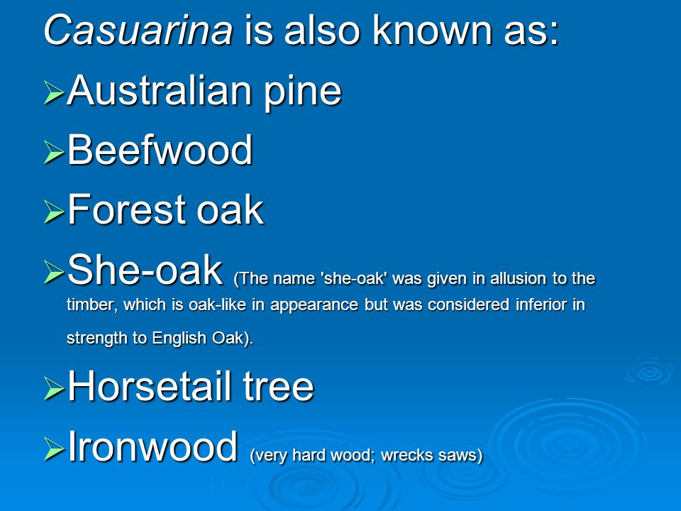 Casuarina is also known as: Australian pine Australian pine Beefwood Beefwood Forest oak Forest oak She-oak (The name 'she-oak' was given in allusion