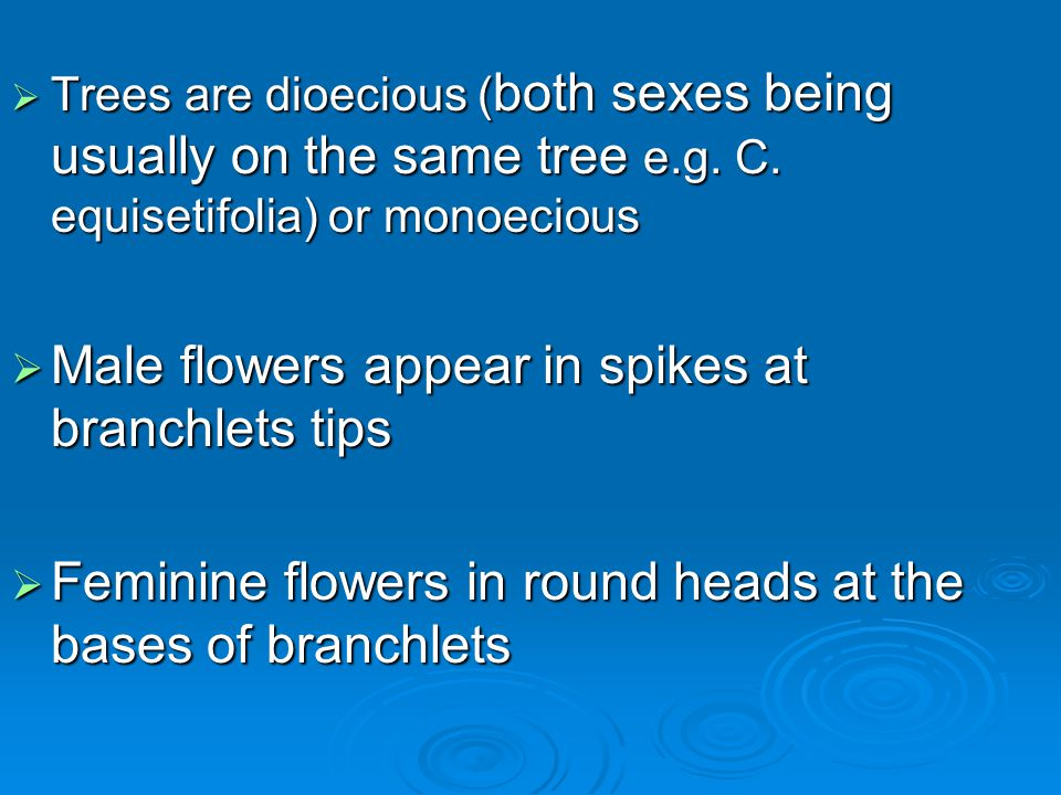 Trees are dioecious ( both sexes being usually on the same tree e.g. C. equisetifolia) or monoecious Trees are dioecious ( both sexes being usually on