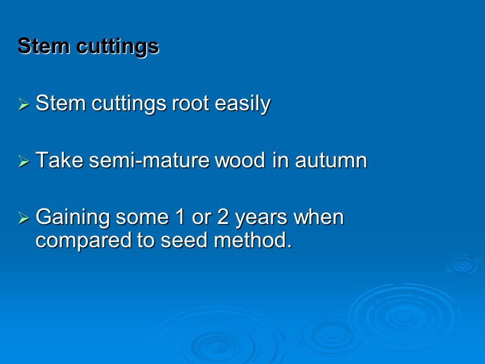Stem cuttings Stem cuttings root easily Stem cuttings root easily Take semi-mature wood in autumn Take semi-mature wood in autumn Gaining some 1 or 2 years when compared to seed method.