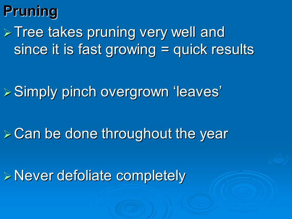 Pruning Tree takes pruning very well and since it is fast growing = quick results Tree takes pruning very well and since it is fast growing = quick re