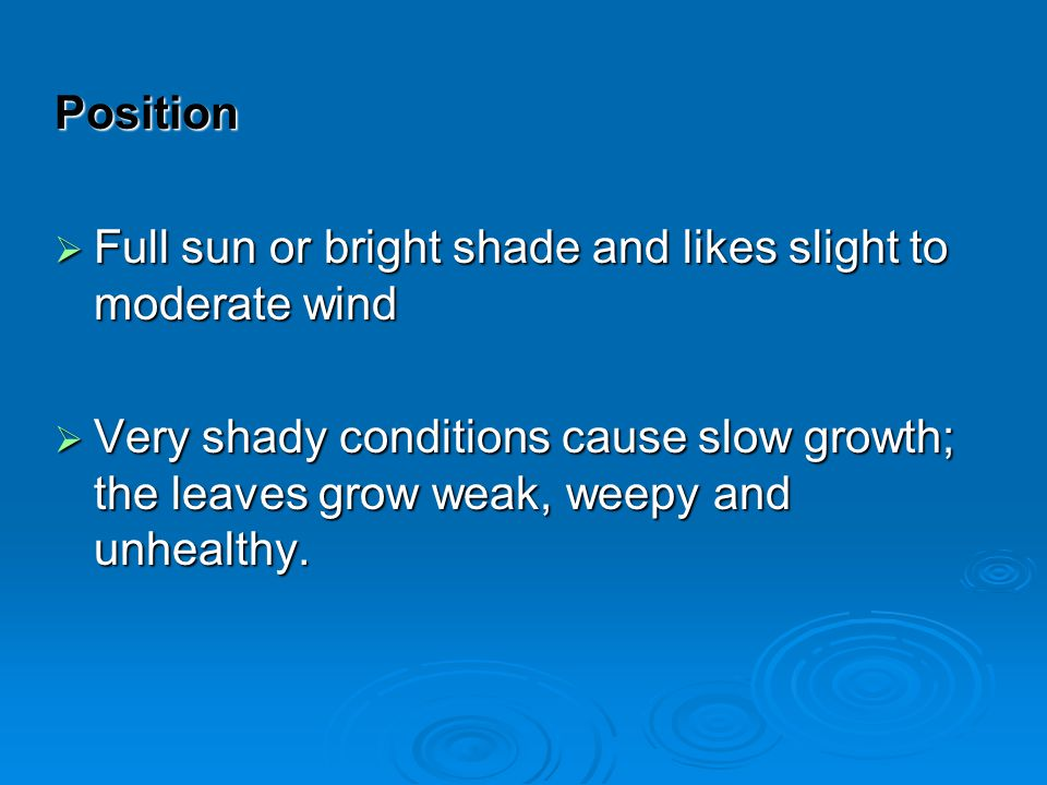 Position Full sun or bright shade and likes slight to moderate wind Full sun or bright shade and likes slight to moderate wind Very shady conditions c