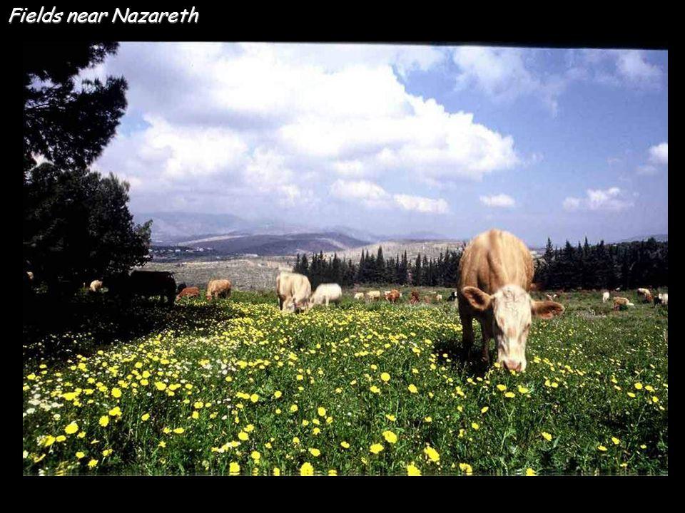 Sand dunes in Negev Naqab Deseret