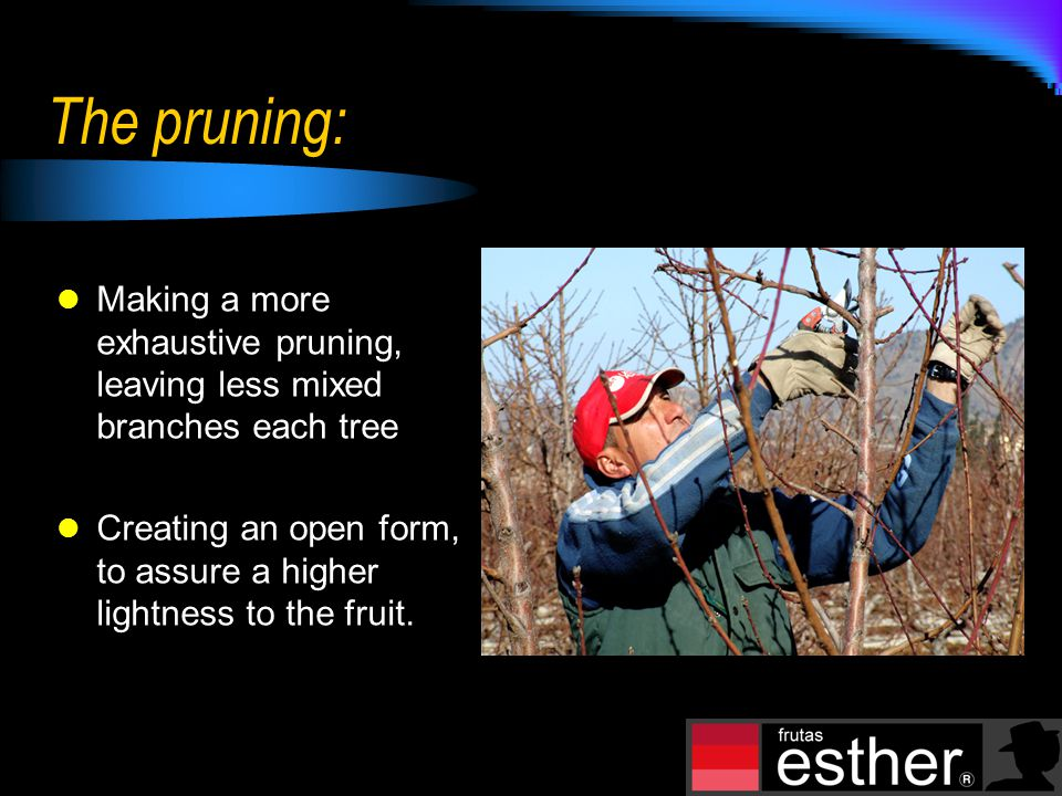 The pruning: Making a more exhaustive pruning, leaving less mixed branches each tree Creating an open form, to assure a higher lightness to the fruit.