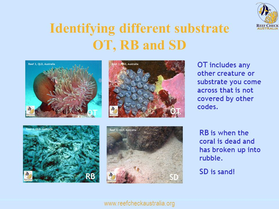 www.reefcheckaustralia.org Identifying different substrate OT, RB and SD OT includes any other creature or substrate you come across that is not cover