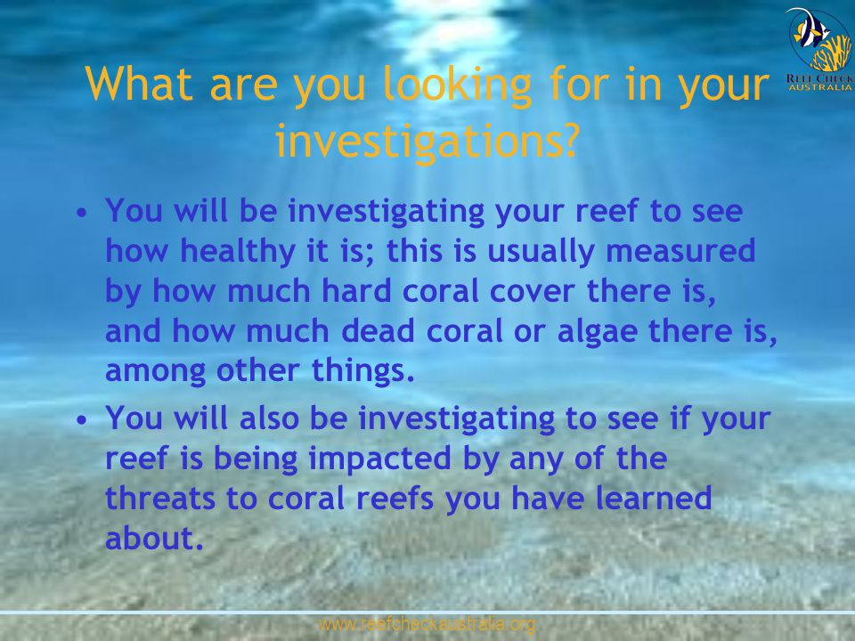 www.reefcheckaustralia.org What are you looking for in your investigations? You will be investigating your reef to see how healthy it is; this is usua