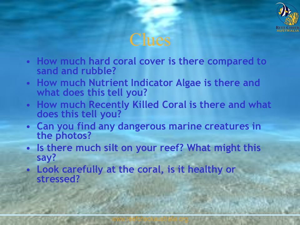 www.reefcheckaustralia.org Clues How much hard coral cover is there compared to sand and rubble? How much Nutrient Indicator Algae is there and what d