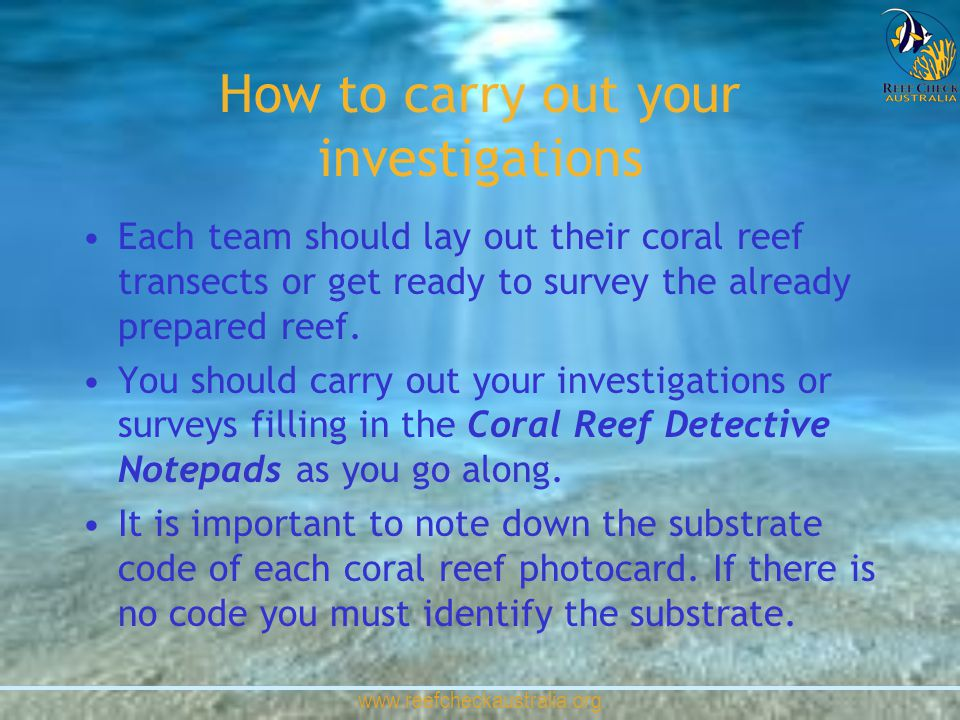 www.reefcheckaustralia.org How to carry out your investigations Each team should lay out their coral reef transects or get ready to survey the already