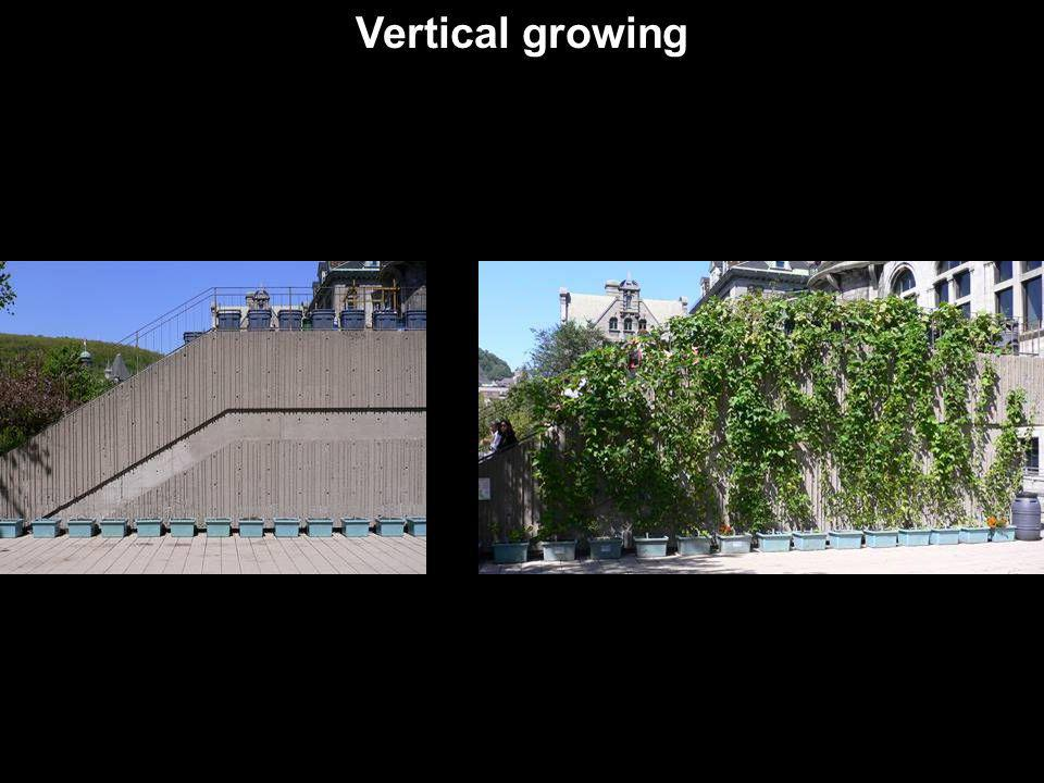 Vertical growing