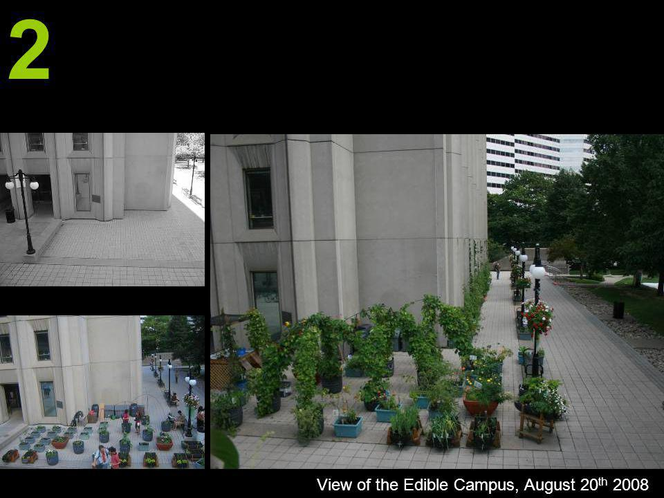 2 View of the Edible Campus, August 20 th 2008