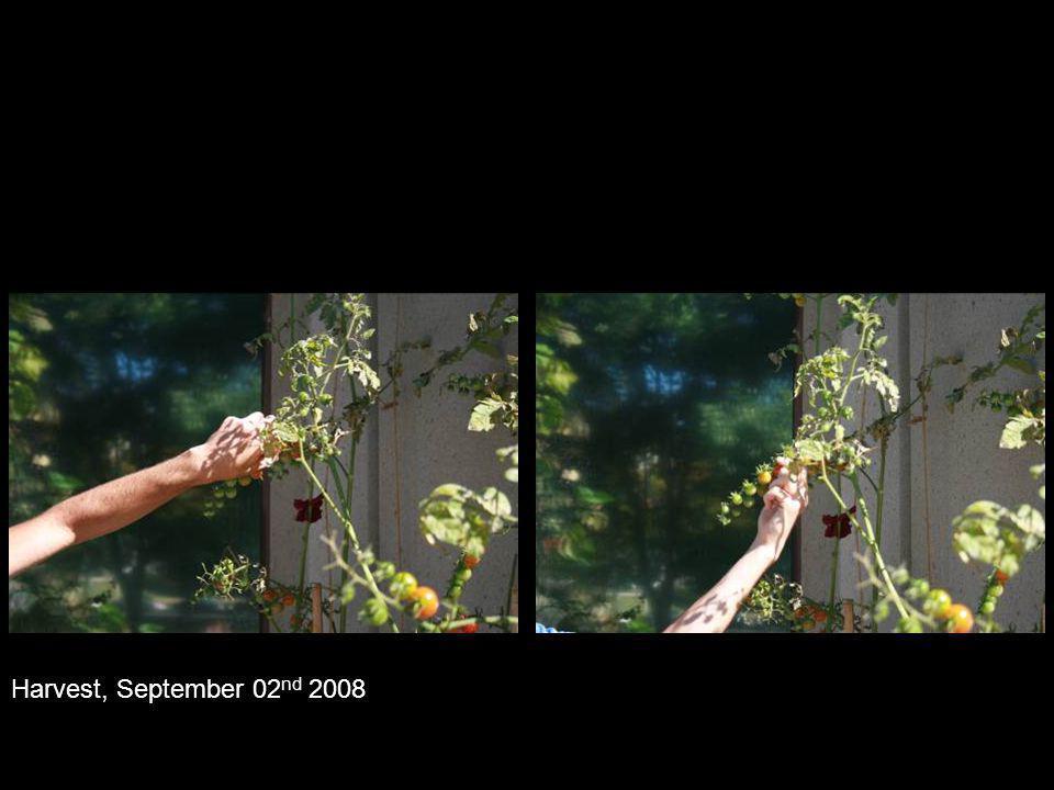 Harvest, September 02 nd 2008