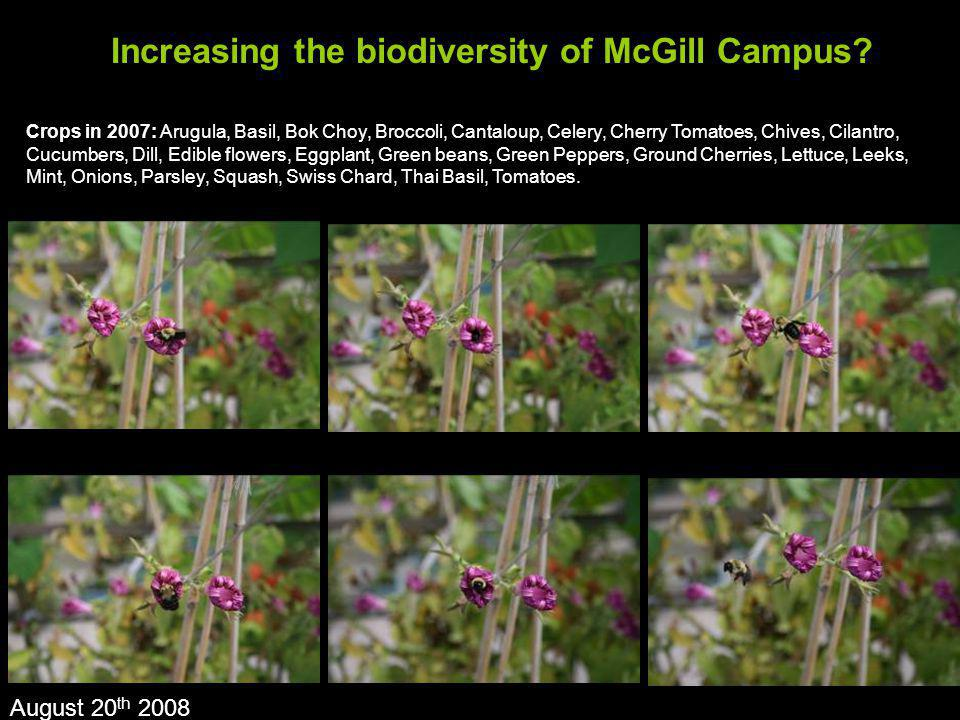 Increasing the biodiversity of McGill Campus? August 20 th 2008 Crops in 2007: Arugula, Basil, Bok Choy, Broccoli, Cantaloup, Celery, Cherry Tomatoes,