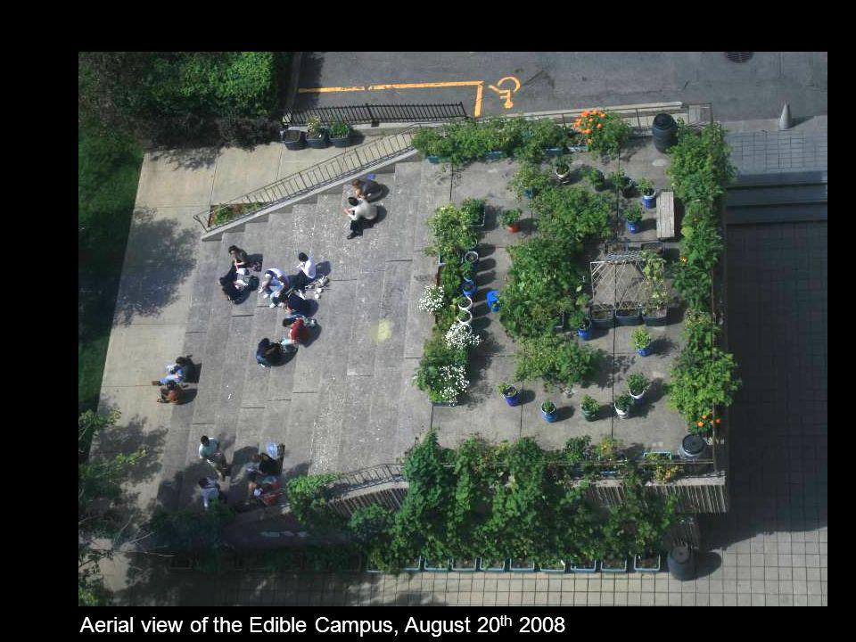 Aerial view of the Edible Campus, August 20 th 2008