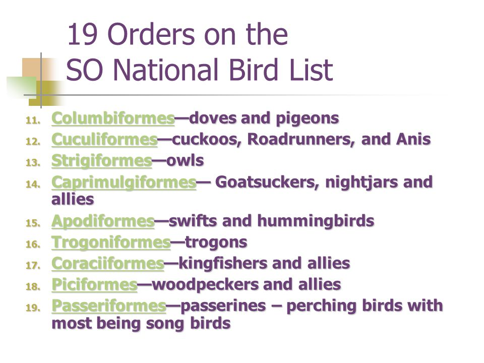 19 Orders on the SO National Bird List 11.Columbiformesdoves and pigeons Columbiformes 12.