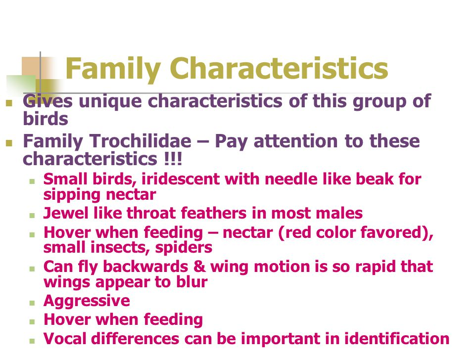 Family Characteristics Gives unique characteristics of this group of birds Family Trochilidae – Pay attention to these characteristics !!! Small birds