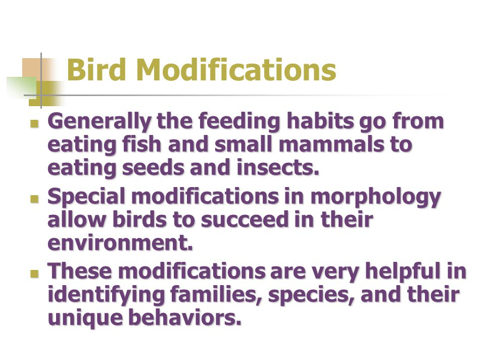 Bird Modifications Generally the feeding habits go from eating fish and small mammals to eating seeds and insects.