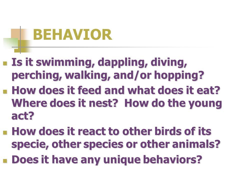 BEHAVIOR Is it swimming, dappling, diving, perching, walking, and/or hopping? Is it swimming, dappling, diving, perching, walking, and/or hopping? How