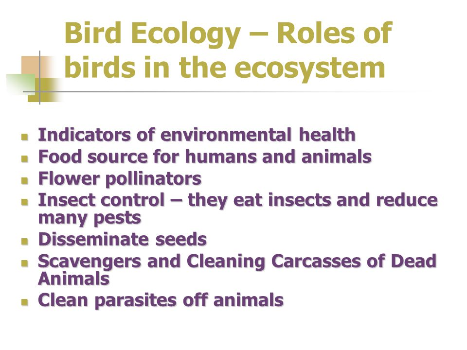 Bird Ecology – Roles of birds in the ecosystem Indicators of environmental health Indicators of environmental health Food source for humans and animals Food source for humans and animals Flower pollinators Flower pollinators Insect control – they eat insects and reduce many pests Insect control – they eat insects and reduce many pests Disseminate seeds Disseminate seeds Scavengers and Cleaning Carcasses of Dead Animals Scavengers and Cleaning Carcasses of Dead Animals Clean parasites off animals Clean parasites off animals