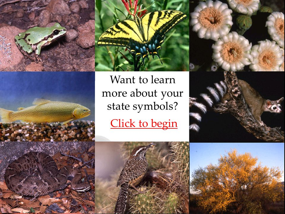 Want to learn more about your state symbols? Click to begin