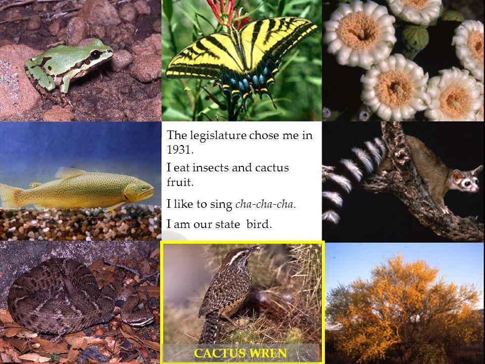 CACTUS WREN The legislature chose me in 1931.I eat insects and cactus fruit.