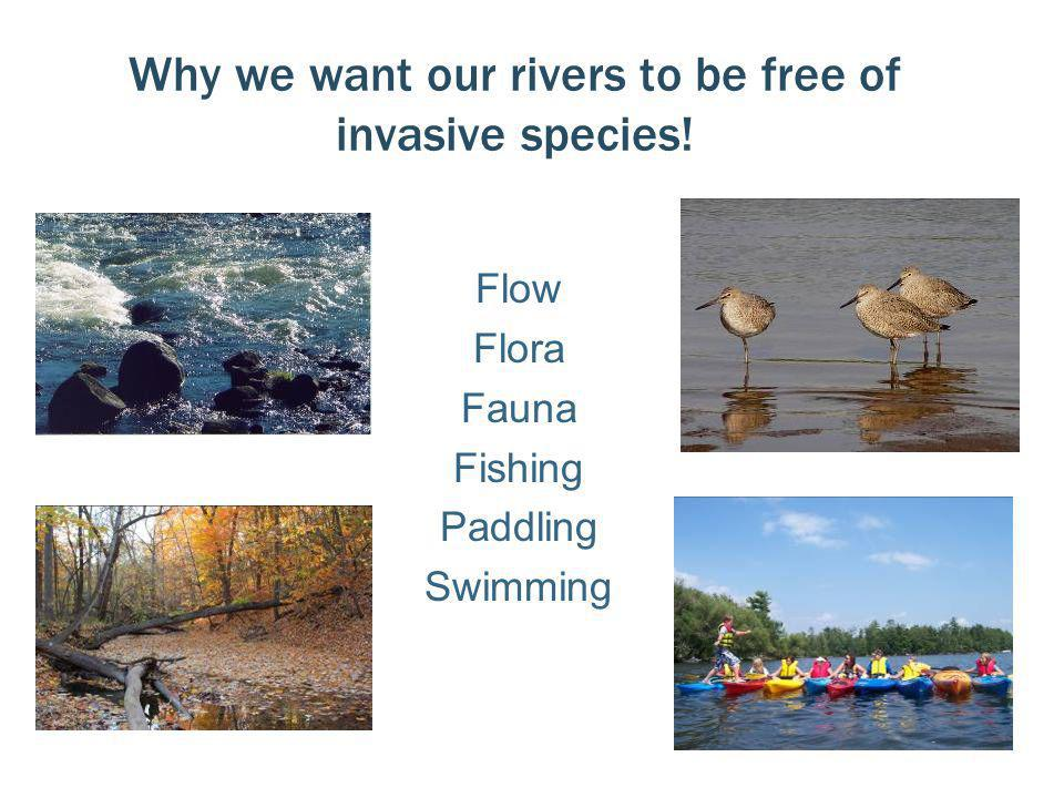 Why we want our rivers to be free of invasive species! Flow Flora Fauna Fishing Paddling Swimming