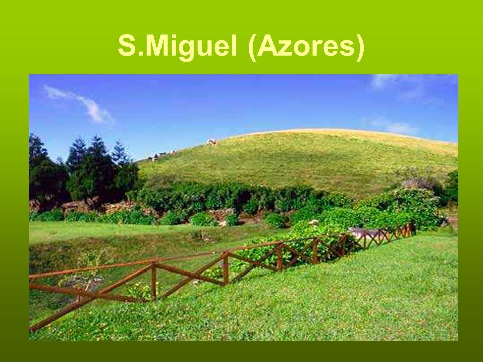 S.Miguel (Azores)