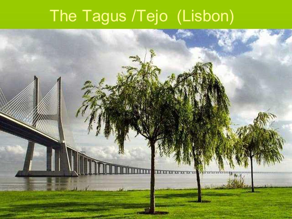 The Tagus /Tejo (Lisbon)