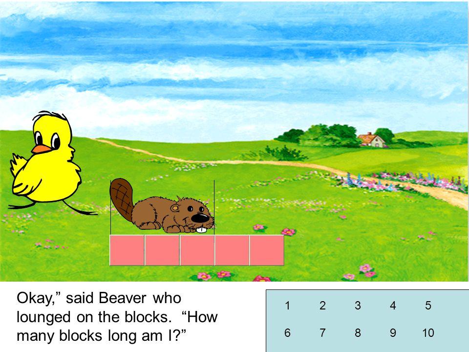 Okay, said Beaver who lounged on the blocks. How many blocks long am I