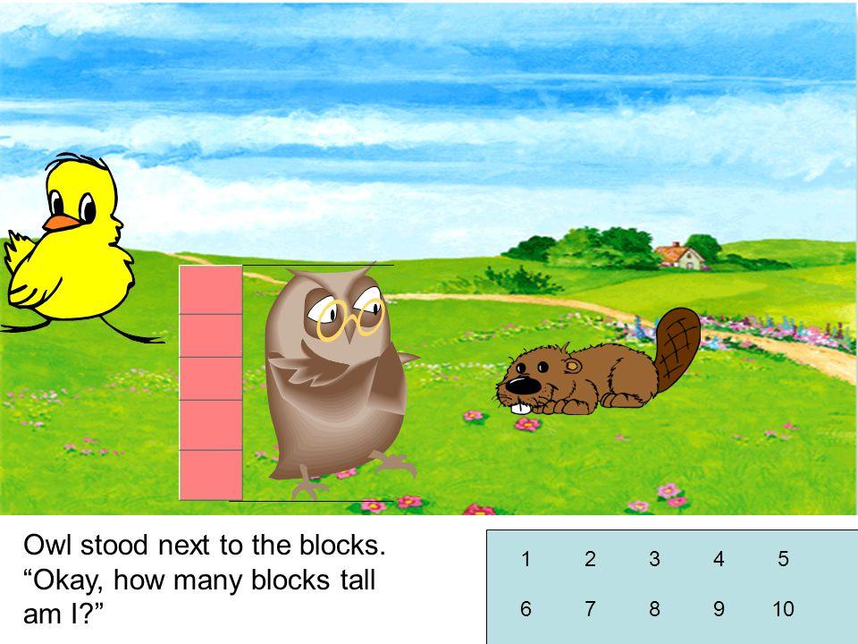 Owl stood next to the blocks. Okay, how many blocks tall am I