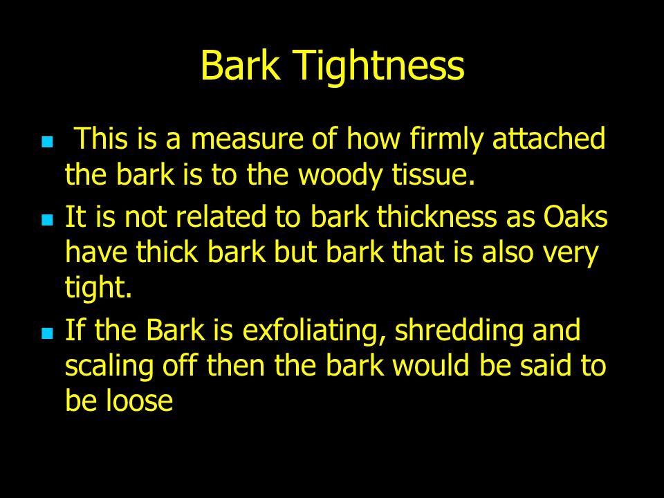 Bark Tightness This is a measure of how firmly attached the bark is to the woody tissue. It is not related to bark thickness as Oaks have thick bark b