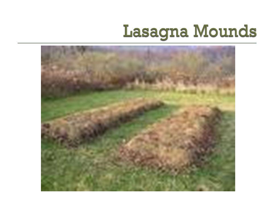 My Lasagna Garden