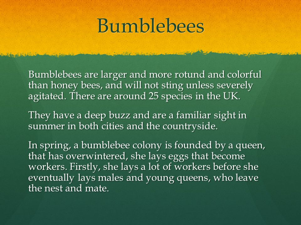 The life cycle of the bumblebee