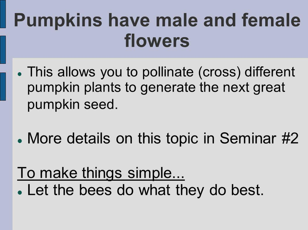 Pumpkins have male and female flowers This allows you to pollinate (cross) different pumpkin plants to generate the next great pumpkin seed.