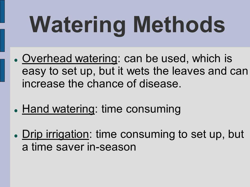 Watering Methods Overhead watering: can be used, which is easy to set up, but it wets the leaves and can increase the chance of disease.