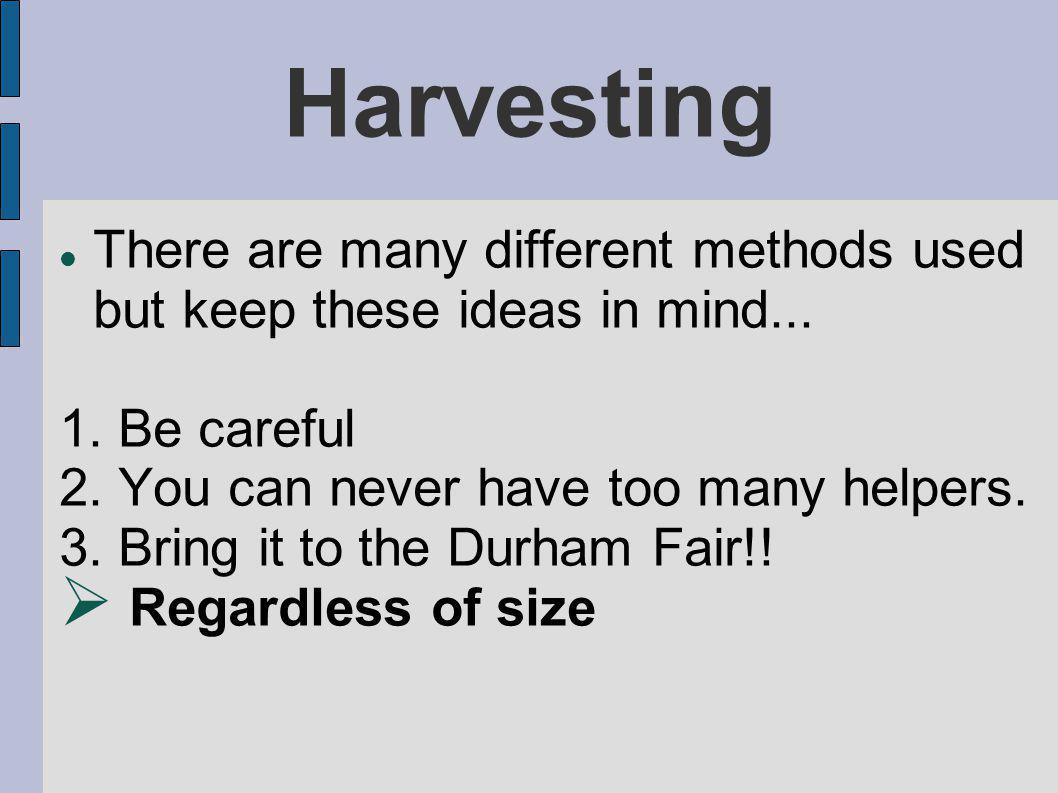Harvesting There are many different methods used but keep these ideas in mind...