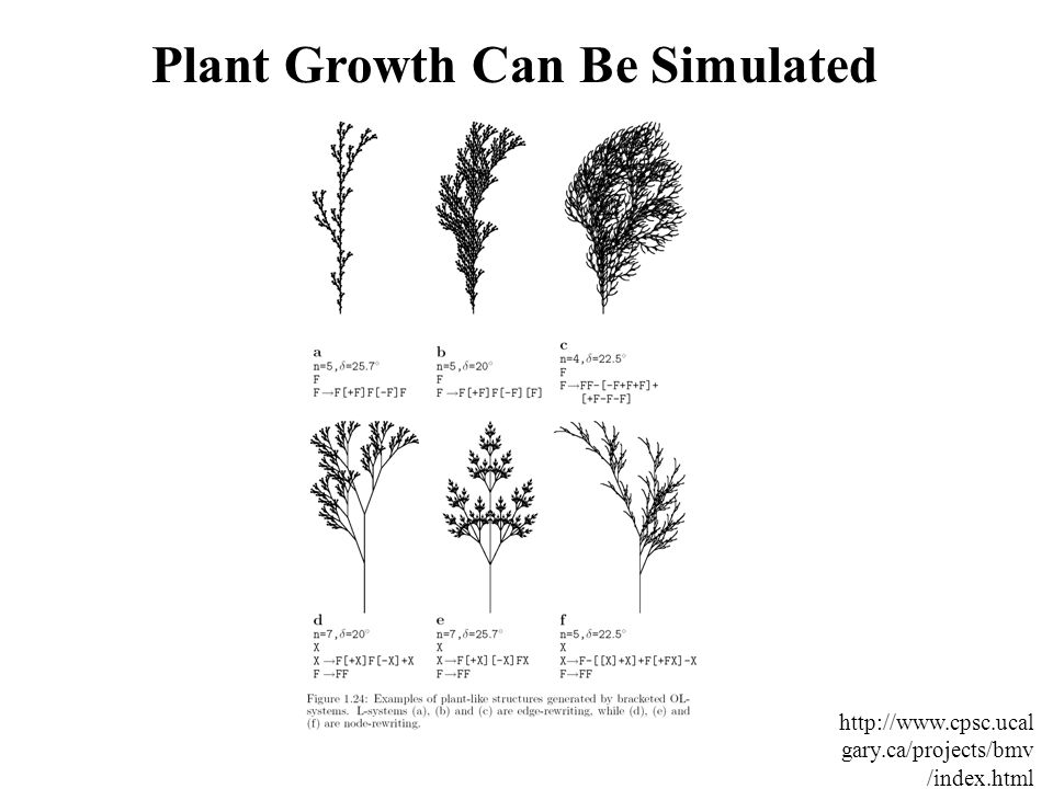 Plant Growth Can Be Simulated http://www.cpsc.ucal gary.ca/projects/bmv /index.html