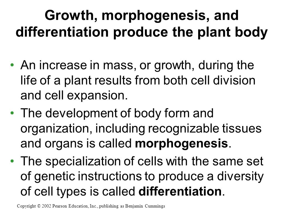 An increase in mass, or growth, during the life of a plant results from both cell division and cell expansion.