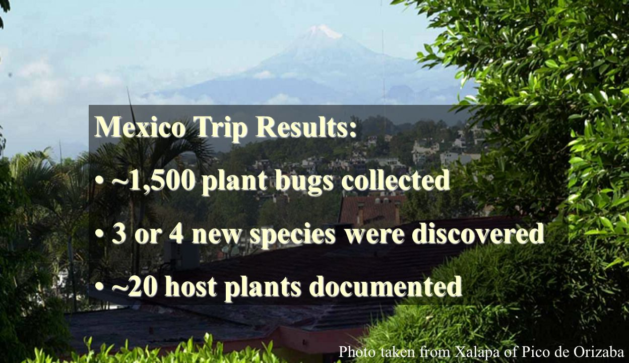 Mexico Trip Results: ~1,500 plant bugs collected ~1,500 plant bugs collected 3 or 4 new species were discovered 3 or 4 new species were discovered ~20 host plants documented ~20 host plants documented Photo taken from Xalapa of Pico de Orizaba