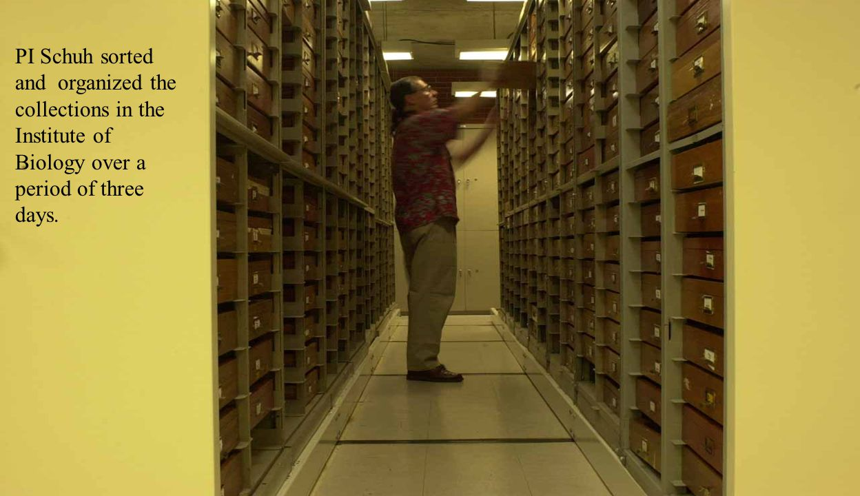 PI Schuh sorted and organized the collections in the Institute of Biology over a period of three days.