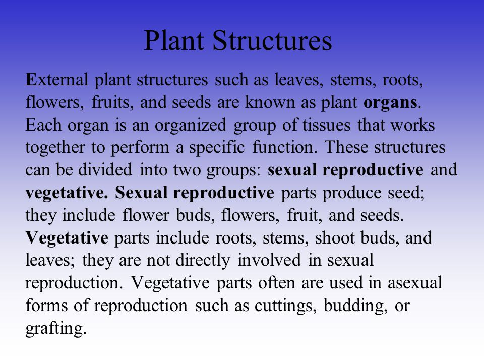 Plant Structures External plant structures such as leaves, stems, roots, flowers, fruits, and seeds are known as plant organs. Each organ is an organi