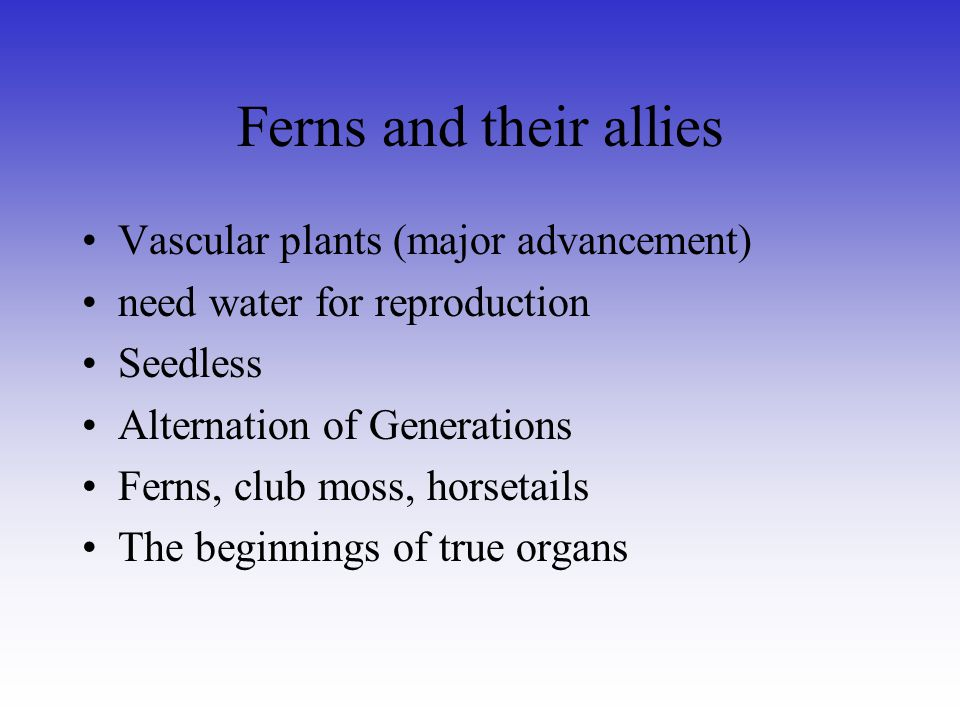 Ferns and their allies Vascular plants (major advancement) need water for reproduction Seedless Alternation of Generations Ferns, club moss, horsetail