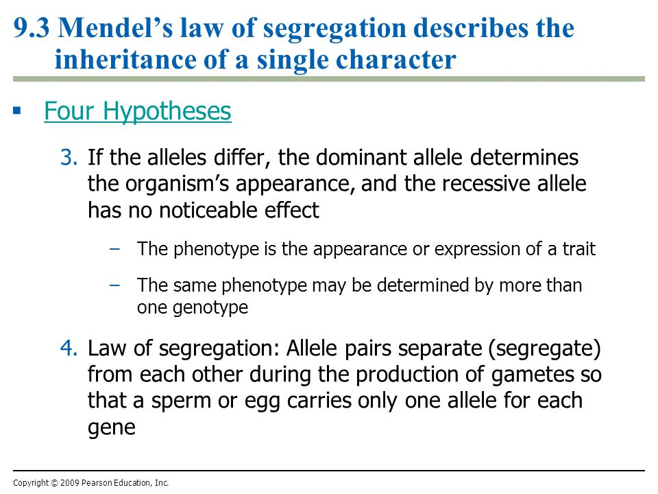 9.3 Mendels law of segregation describes the inheritance of a single character Four Hypotheses 3.If the alleles differ, the dominant allele determines the organisms appearance, and the recessive allele has no noticeable effect –The phenotype is the appearance or expression of a trait –The same phenotype may be determined by more than one genotype 4.Law of segregation: Allele pairs separate (segregate) from each other during the production of gametes so that a sperm or egg carries only one allele for each gene Copyright © 2009 Pearson Education, Inc.