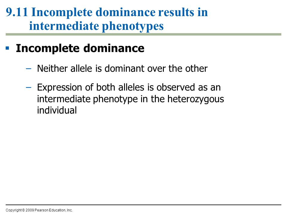 9.11 Incomplete dominance results in intermediate phenotypes Incomplete dominance –Neither allele is dominant over the other –Expression of both alleles is observed as an intermediate phenotype in the heterozygous individual Copyright © 2009 Pearson Education, Inc.