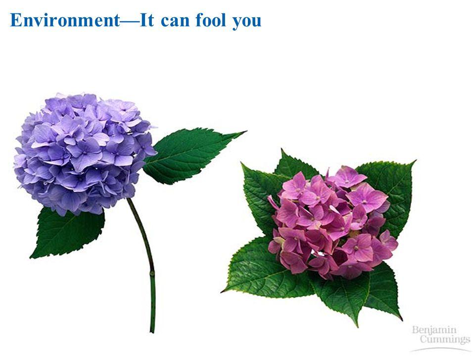 EnvironmentIt can fool you